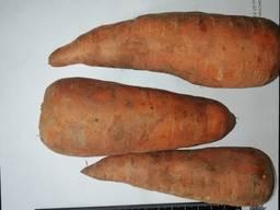 Jeg vil sælge gulerødder engros Kasakhstan